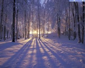 viale inverno